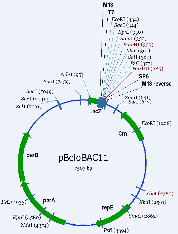 See the vector pBeloBAC11