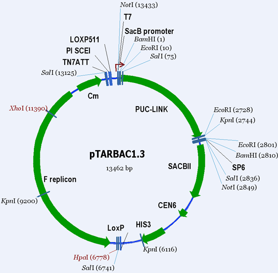 See the vector pTARBAC1.3