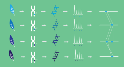 Large DNA fragment capture diagram 400px